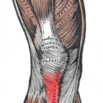 Patellar Tendonitis and Running: Symptoms, Causes and Research-Backed Treatment Options