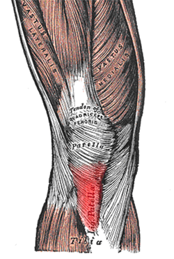 Patellar Tendonitis running