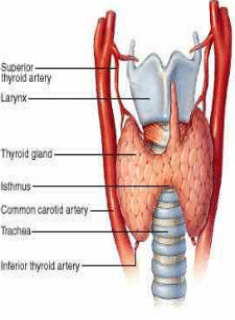 thyroid imbalance in runners