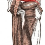 Piriformis Syndrome: How to detect it and strengthening and stretching programs to help you heal