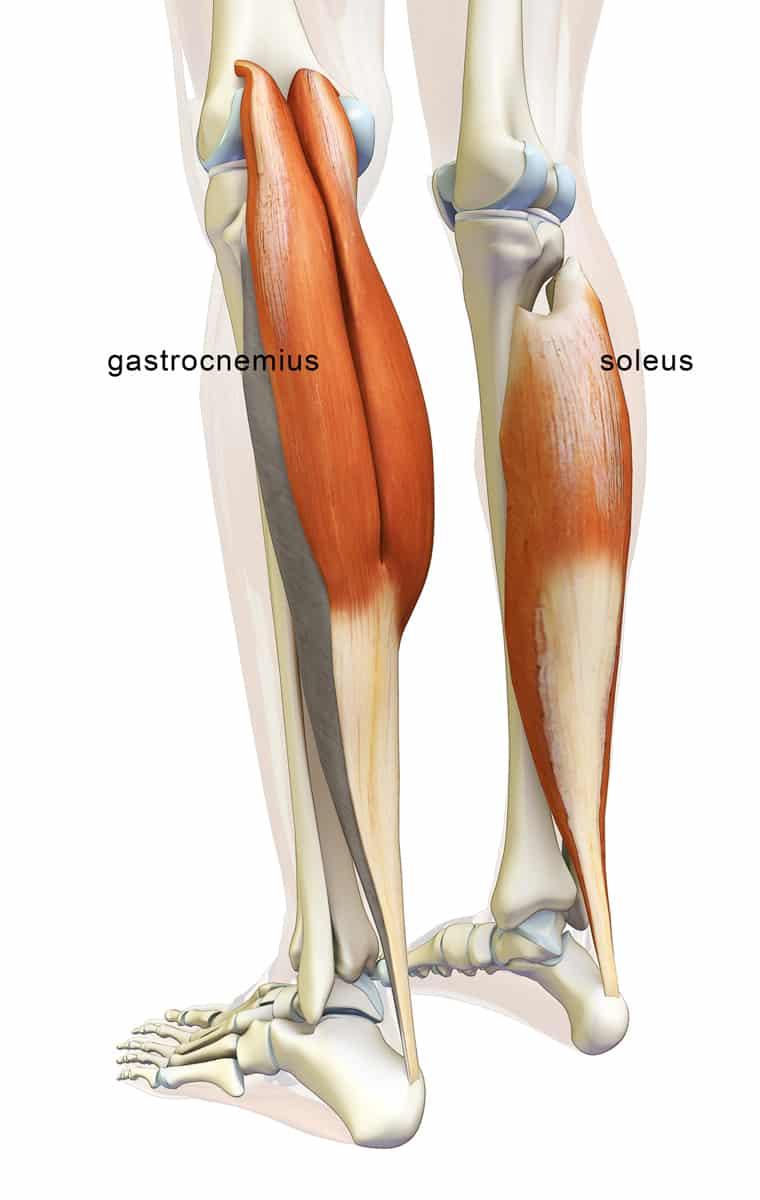Leg knee anatomy